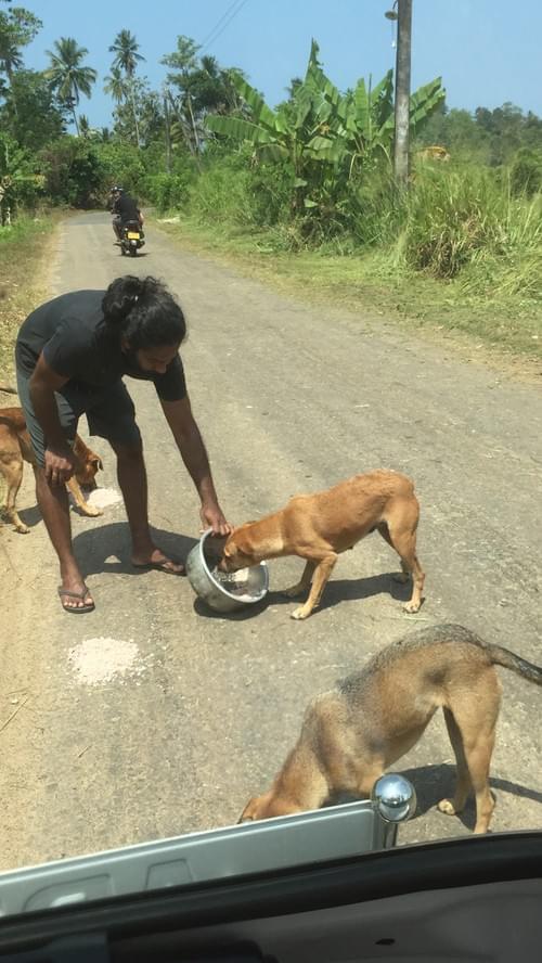 BoBo's Cinnamon Powder 100g - Support The Street Dogs in Sri Lanka