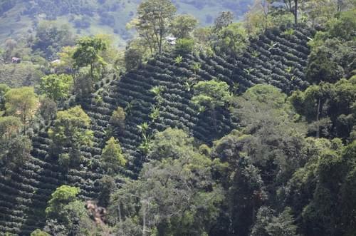 Le Colombien - Narino - Arboleda
