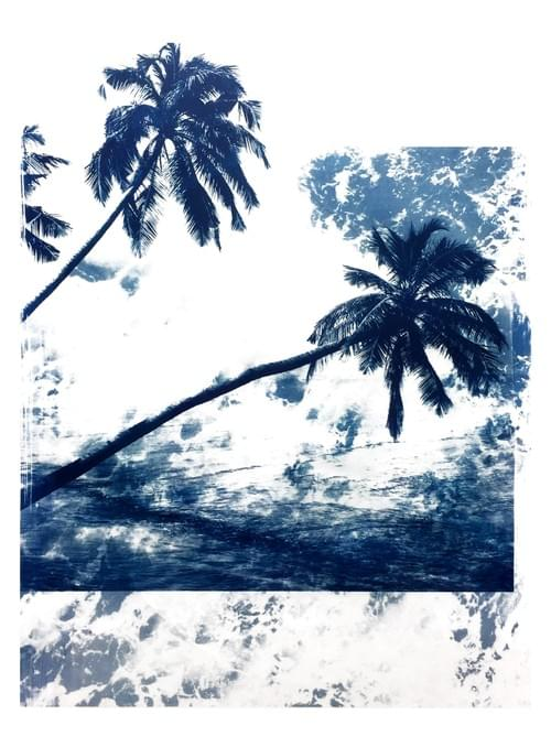 Palm Series #2