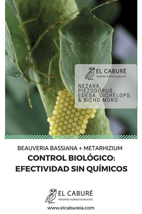 Bauveria Bassiana + Metarhizium