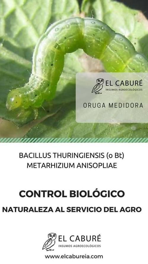 Bacillus Thuringiensis -BT + Metarhizium Anisopliae