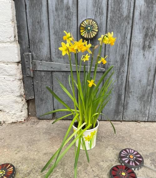Orbital Garden Stake (50 cms) Dark Yellow