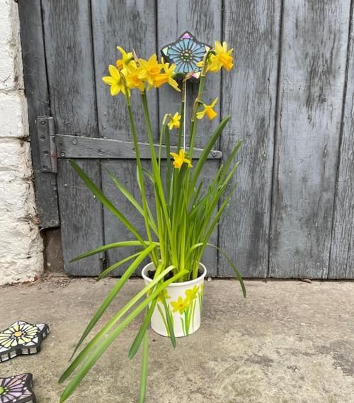 Starry Flower Garden Stake (50 cms) Teal Blue