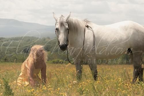 2020 Equine Calendar