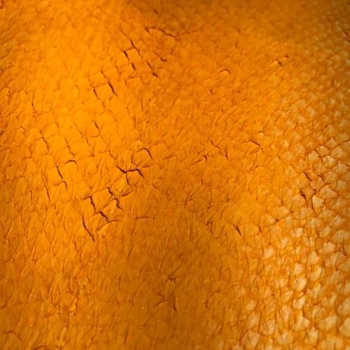 Cuir de saumon couleur jaune moutarde