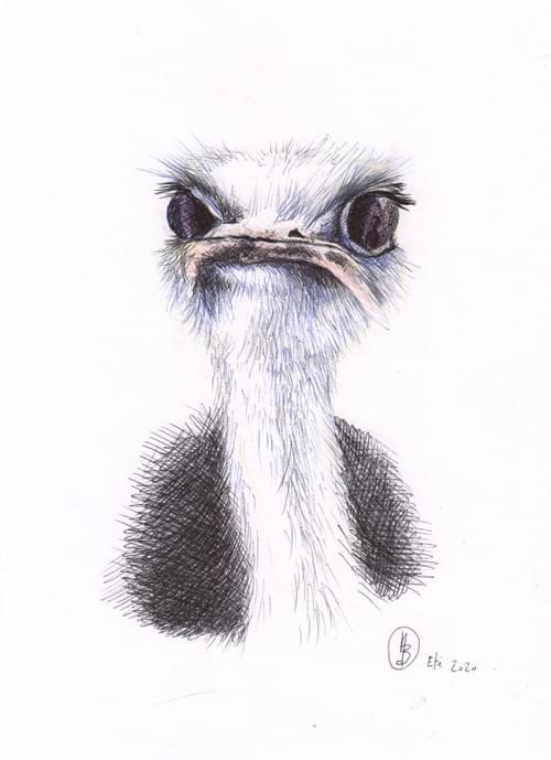 L'autruche