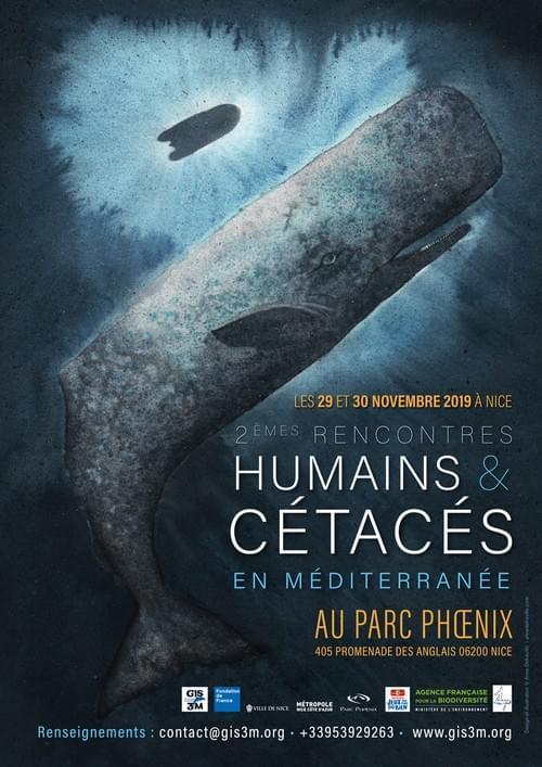 """Cachalot, illustration de l'affiche  des """"Rencontres Humains & Cétacés"""" à Nice"""