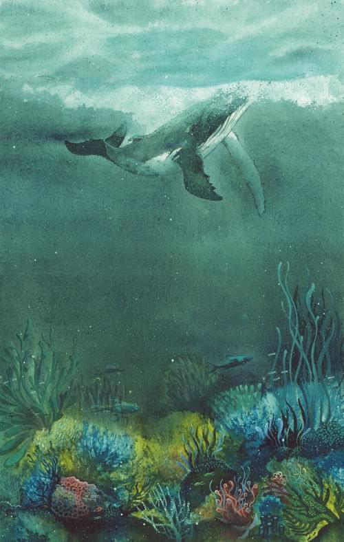 Baleine à bosse en balade