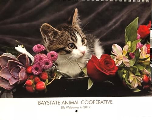 Order your Bay State Animal Cooperative's 2020 Calendar