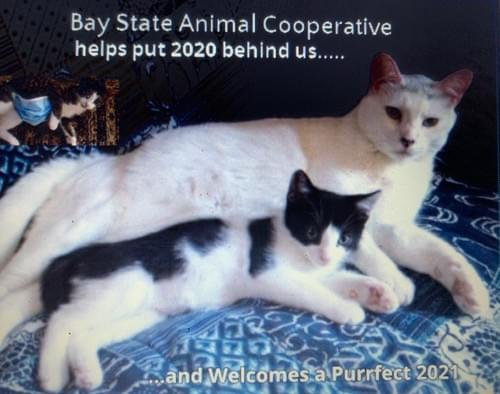 Order your Bay State Animal Cooperative's 2021 Calendar here!