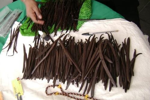 Picadura Vanilla Planifolia Beans Shortcuts Length: 1-2 inches (2.5 cms - 5.00 cms)