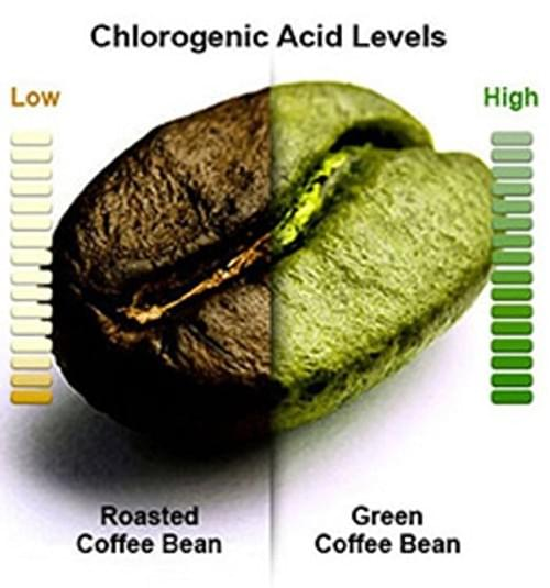 Organic Sport Green Coffee Grounded Ginger, Cardamom & Turmeric Blend 20 Tea Bags Box