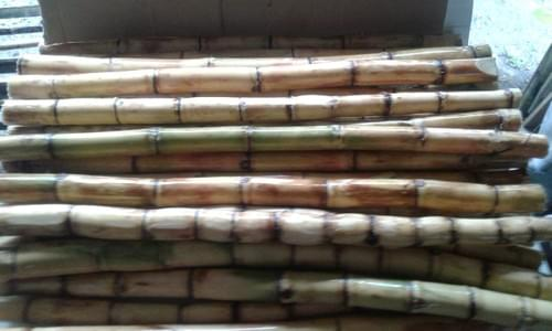 RAW ORGANICALLY SOWN SUGAR CANE PREMIUM 75% JUICY, SOLD BY CASE 50 LBS / USD