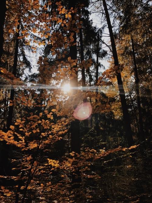 Meditationen in die Stille + Gewahrsein durch den Körper