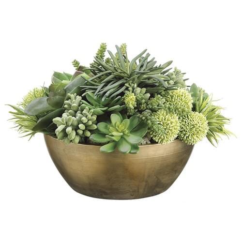 succulent mix in brass bowl