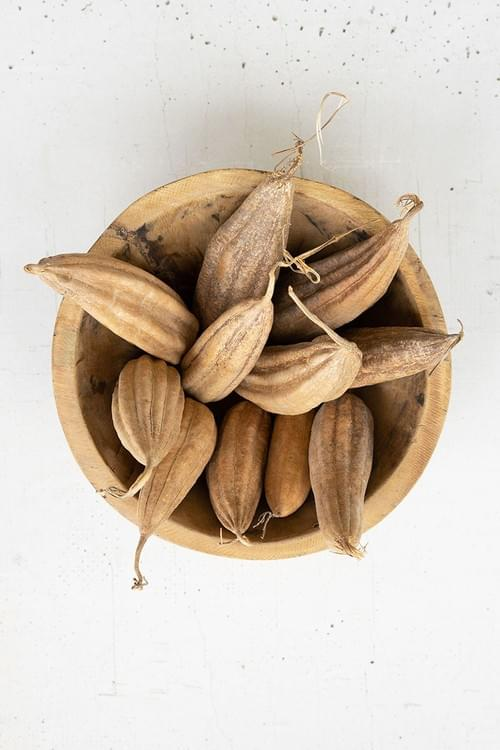 DRIED PODS