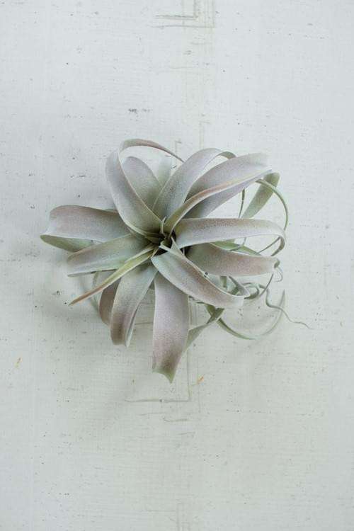 PACK OF 6 LARGE AIRPLANT