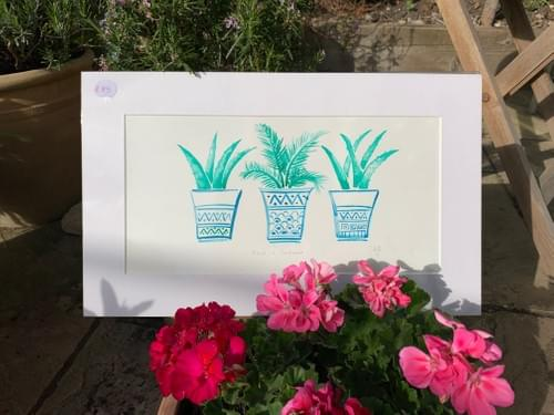 Turquoise Palms in Pots