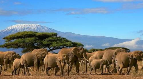 Mt. Kilimanjaro + Music Festival 2019