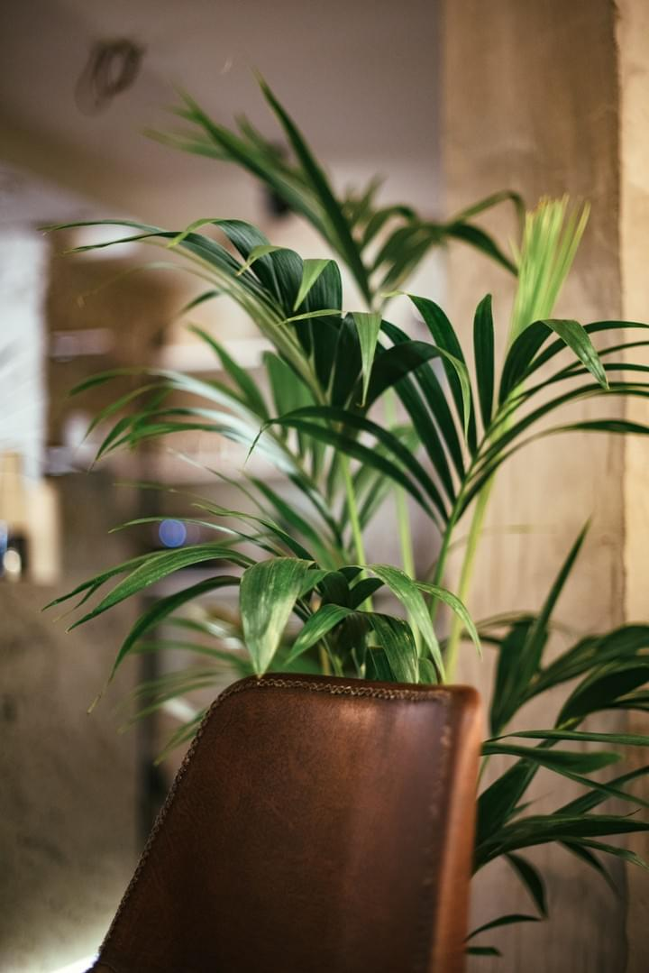 Indoor Flower Plant Design