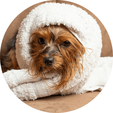 Get your dog washed and groomed - Bed and Biscuit Boarding Kennels, Wexford
