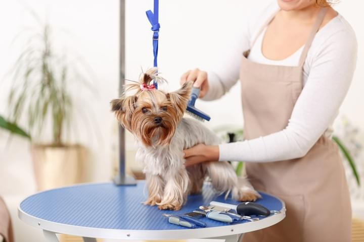 Pet Grooming for sale Perth