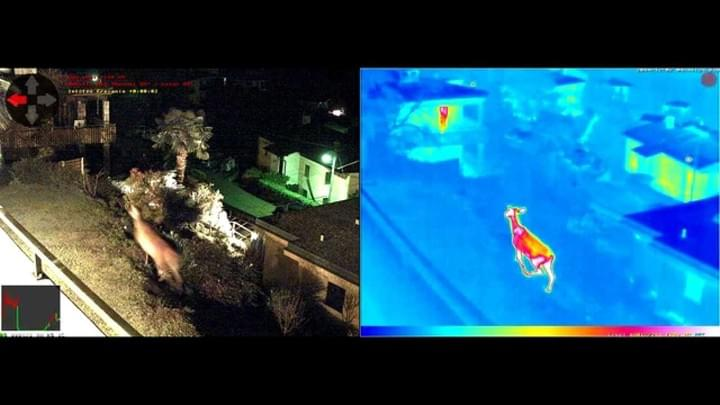 Mobotix Thermal Camera