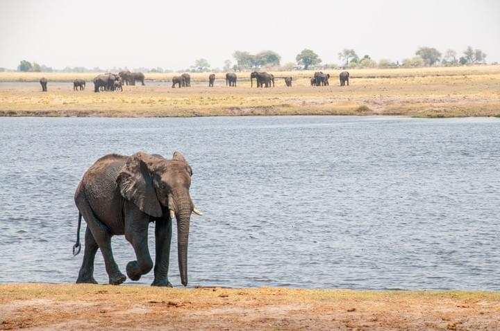 Chobe national park on safari