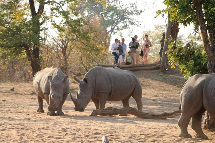Mosi oa Tunya Natinal Park, White Rhino, Walking Safari, Rhino Walk, Livingstone Activities, Victoria Falls Activities