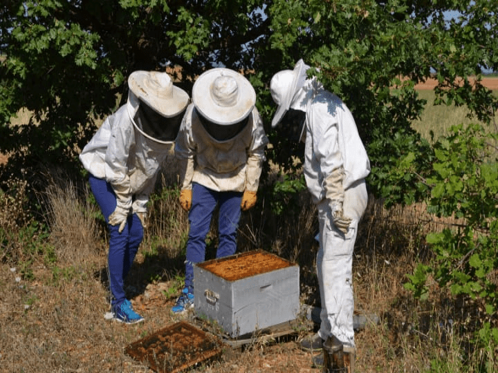 Beekeeping in Provence