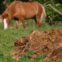 A pile of horse poop on a meadow, in the background a horse