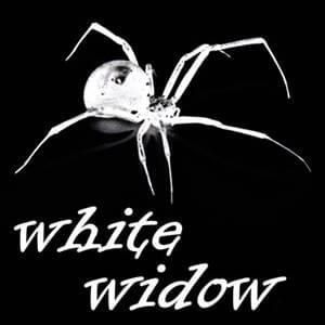 being a white widow is a survival strategy, using sexual enticement to control others, it works but you do not get to be intimate, you can change your survival strategy, here is how, possibilitymanagement
