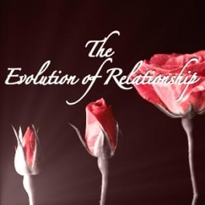 Rose Blooming, Evolution, Relationship, Possibility Management