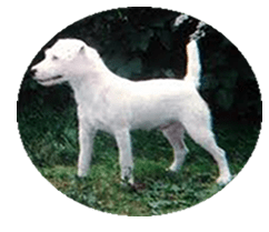 Image of white dog
