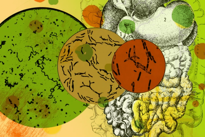 illustration of microbes and gut