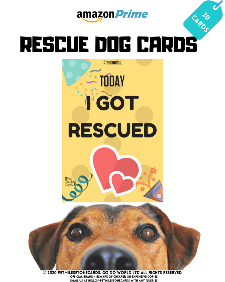 rescue-dog-cards-amazon