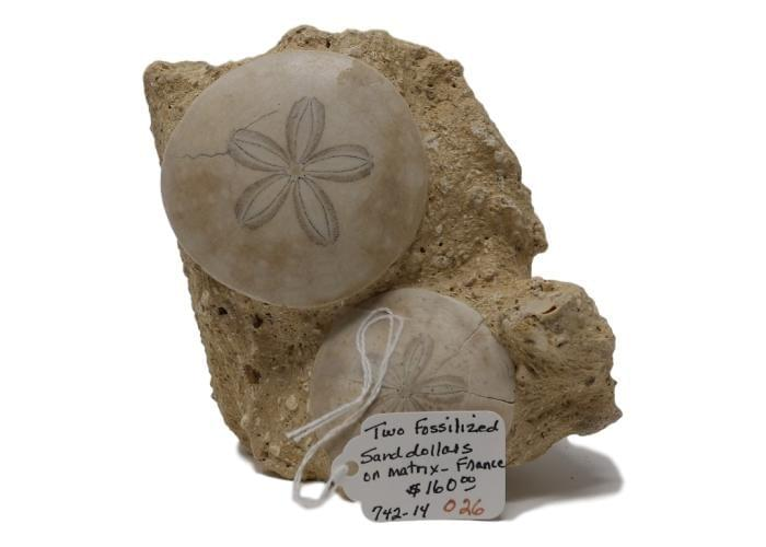 Fossilized Sand Dollars Dallas TX