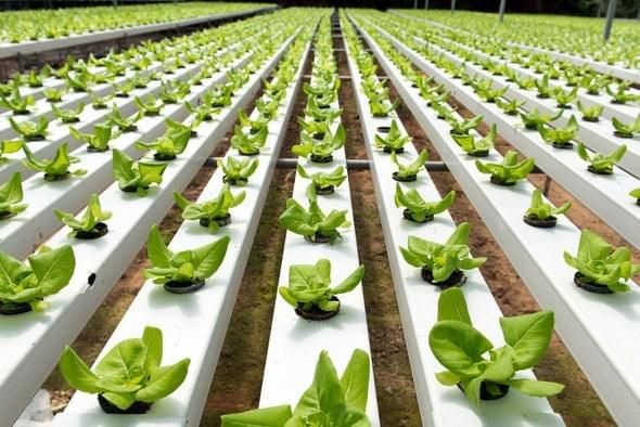 Coaxial Liquid Chillre for Vertical Smart Farming
