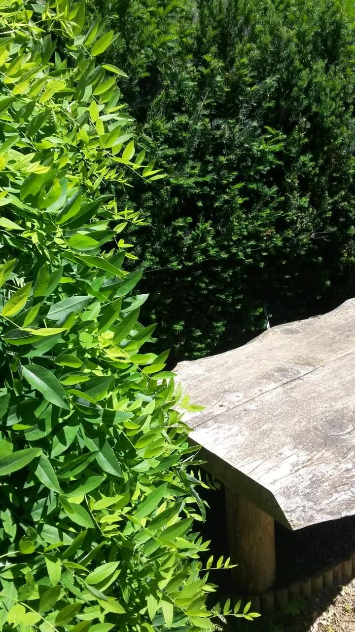Progettare Un Giardino In Campagna il giardiniere che progetta - o.p.r.a. g p