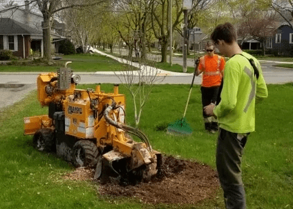 Stump Removal, Stump Grinding