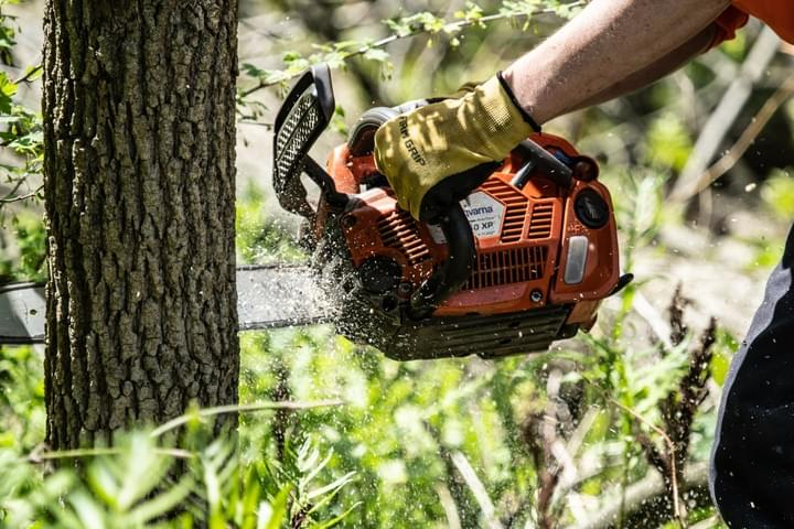 Tree Removal Burlington