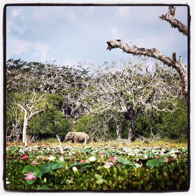 srilankareisen.ch travel yala national park