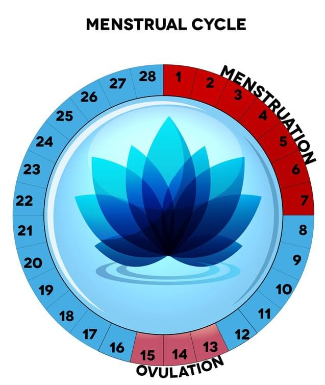 Menstruation and Ovulation Fertility Chart