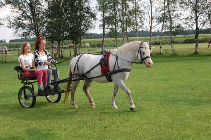 Pony camp in the netherlands english