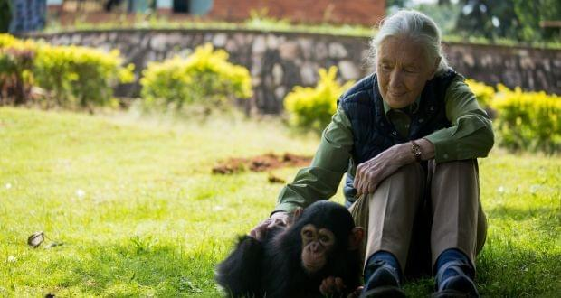 Jane Goodall, scientist & climate activist