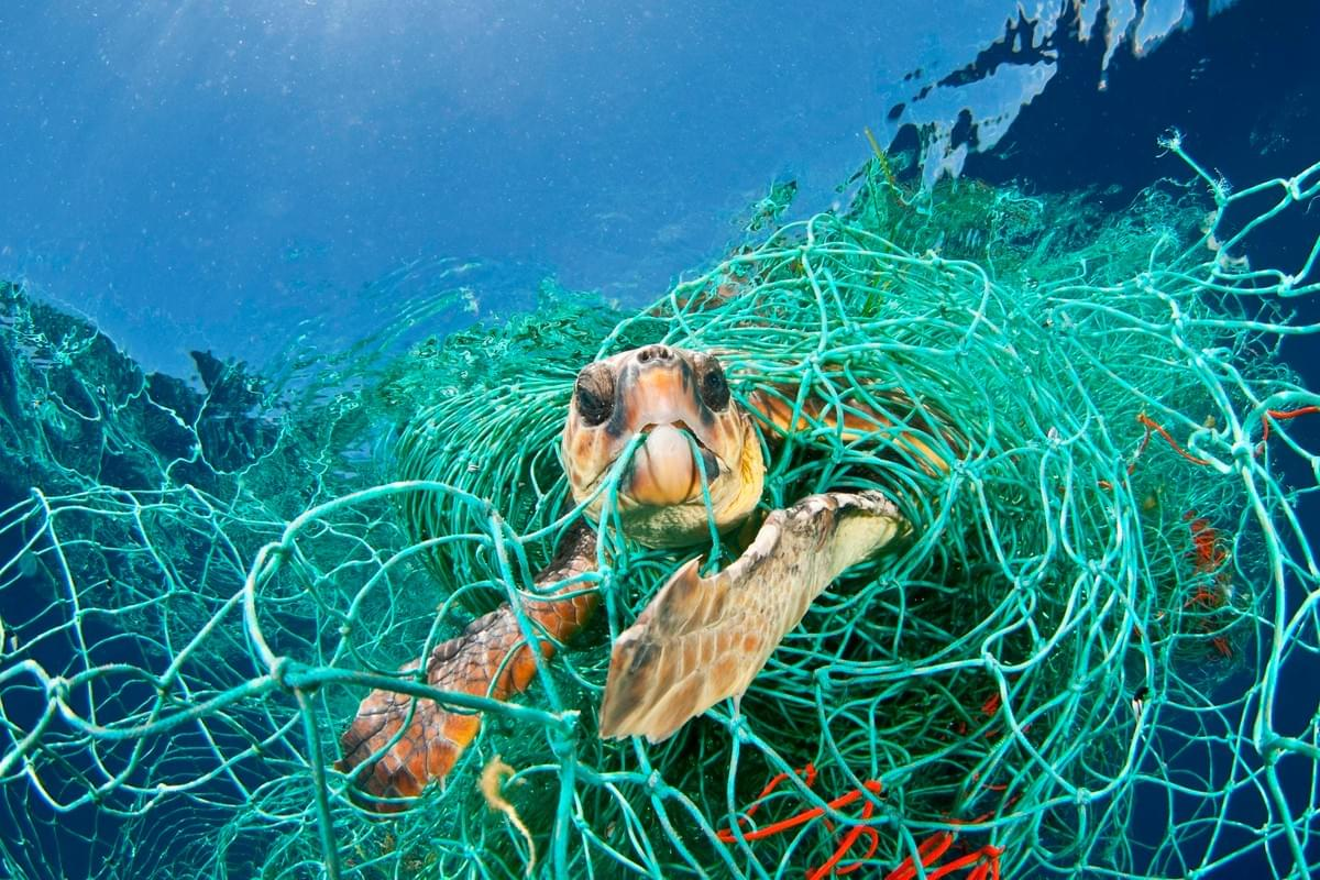 Plastic kickback, turtle stuck in plastic fishing net