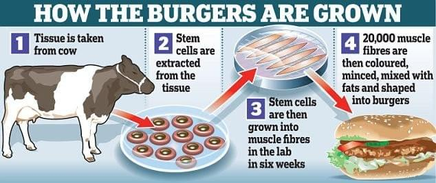 How are lab-grown meat burgers grown