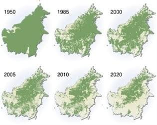 Tropical forest coverage of Borneo from 1950 to 2020