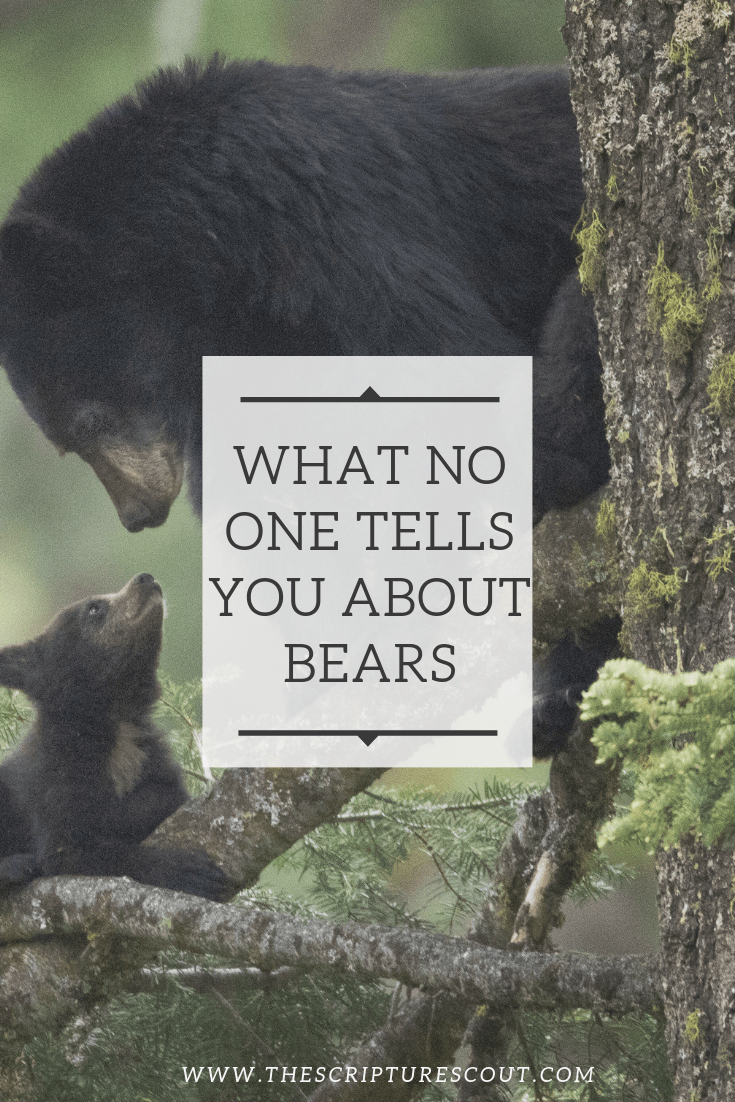 What No One Tells  You About Bears, I Samuel 17:34