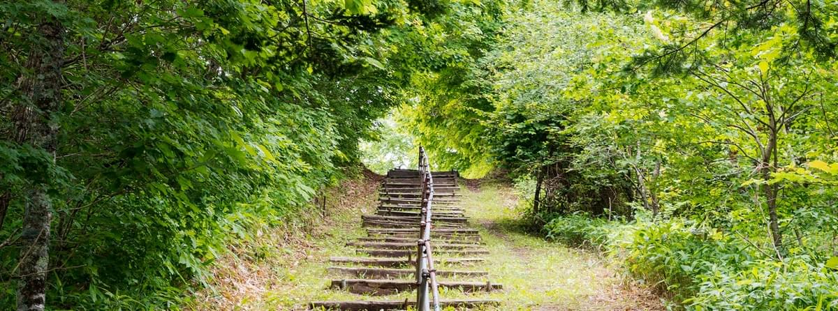 Woodland temple path/steps